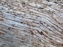 Textura natural del tronco de árbol, superficie externa del pino muerto Imagen de archivo
