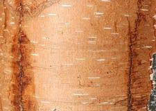 Textura natural do vidoeiro foto de stock royalty free