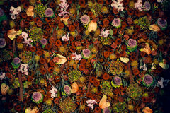 Textura natural hermosa de la pared de la flor Fotografía de archivo