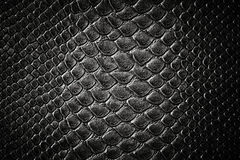 Textura negra de la piel del cocodrilo Imagen de archivo libre de regalías
