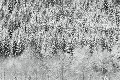 Textura nevosa del bosque del invierno fotos de archivo