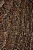 Textura ondulada da casca de árvore fotografia de stock