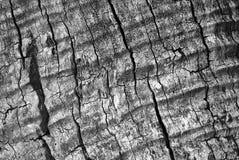 Textura ondulada del árbol fotografía de archivo