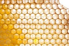 Textura orgánica del panal con la miel fresca Fotografía de archivo libre de regalías