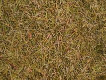 Textura orgânica das agulhas Fotografia de Stock Royalty Free
