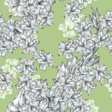 Textura ornamentado sem emenda floral botânica do teste padrão do desenho de lápis da flor no verde calmo para convites ou anúnci fotografia de stock