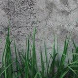 Textura oscura de Grey Coarse Concrete Stone Wall, hierba verde, viejo gris natural detallado resistido envejecido del primer mac foto de archivo
