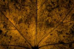 Textura oscura de la hoja Imagen de archivo libre de regalías