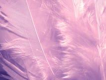 Textura púrpura suave de las plumas Foto de archivo libre de regalías