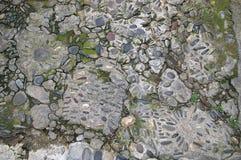 Textura: pavimento de piedra figurado en pueblo medieval Imagen de archivo