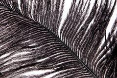Textura preta da plumagem da pena Imagens de Stock Royalty Free