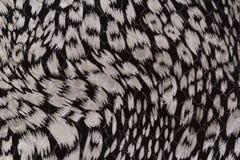 Textura preto e branco da pele Imagem de Stock Royalty Free