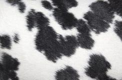 Textura preto e branco manchada Dalmatian do teste padrão Fotografia de Stock