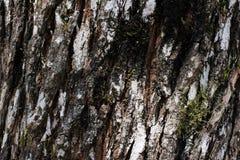 Textura rústica de la corteza de árbol Fotos de archivo