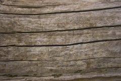 Textura rachada da madeira de carvalho Fotos de Stock
