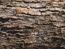 Textura rachada da terra Fundo de madeira velho imagem de stock