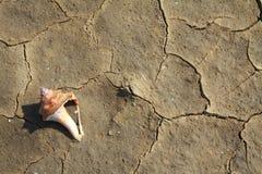 Textura rachada do solo perto do mar Fotografia de Stock Royalty Free