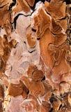 Textura rara da casca de árvore Fotografia de Stock Royalty Free