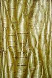 Textura rayada exótica de la corteza Fotografía de archivo