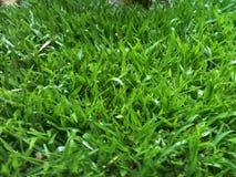 Textura real de la hierba Foto de archivo libre de regalías