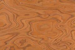 Textura real del diseño del burl Primer del fondo natural fotografía de archivo