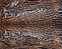 Piel real del leopardo Imagen de archivo libre de regalías