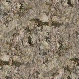 Textura realista de la foto de la corteza de árbol en la alta resolución foto de archivo