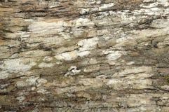 Textura resistida de la corteza de árbol Foto de archivo