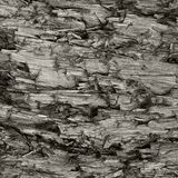 Textura resistida natural do coto de Grey Taupe Brown Cut Tree, grande Gray Lumber Background Wood destruído danificado ferido de imagens de stock
