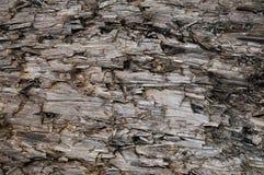 Textura resistida natural do coto de Grey Taupe Brown Cut Tree, grande Gray Lumber destruído danificado ferido detalhado horizont imagens de stock