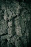 Textura robusta del árbol Foto de archivo libre de regalías