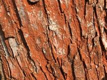Textura roja de la corteza de árbol imágenes de archivo libres de regalías