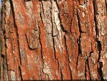 Textura roja de la corteza de árbol foto de archivo