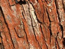 Textura roja de la corteza de árbol foto de archivo libre de regalías