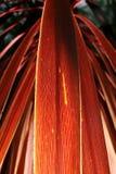 Textura roja de la hoja Fotografía de archivo