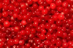 Textura roja del arándano Foto de archivo libre de regalías