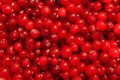 Textura roja del arándano Imagen de archivo
