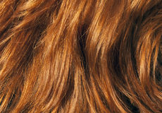 Textura roja del pelo bajo luz del sol Foto de archivo libre de regalías