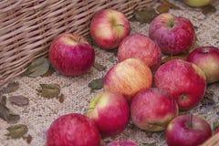 Textura roja fresca de las manzanas Manzana fresca que miente en el contador en textura anaranjada y roja de la cesta de la paja  imágenes de archivo libres de regalías