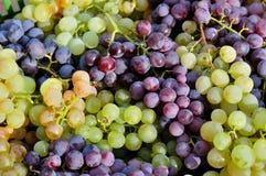 Textura roja y verde de las uvas de la vid Fotos de archivo