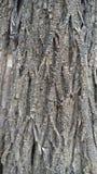 Textura seca da árvore Imagem de Stock