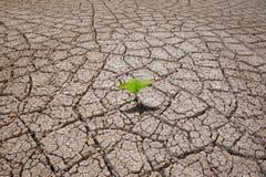 Textura seca da terra Fotos de Stock Royalty Free