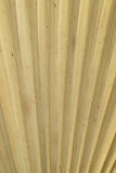 Textura seca das folhas de palmeira Fotos de Stock Royalty Free