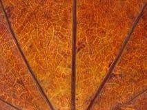 Textura seca de la hoja Foto de archivo libre de regalías