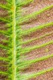 Textura seca de la hoja Imagenes de archivo