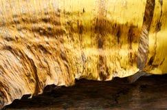 Textura seca de la hoja del plátano Fotos de archivo libres de regalías