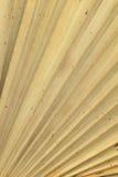 Textura seca de las hojas de palma Fotografía de archivo