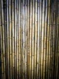 Textura seca de los bambúes Fotos de archivo