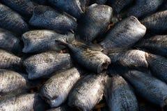 Textura seca de los pescados foto de archivo