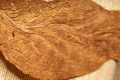 Textura seca del tabaco Imagen de archivo